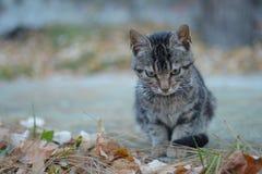 El gris negro coloreó el gato en la parte concreta de la yarda Fotos de archivo libres de regalías