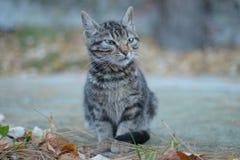 El gris negro coloreó el gato en la parte concreta de la yarda Fotografía de archivo