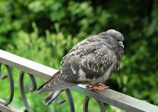 El gris se zambulló en el parque del verano Foto de archivo libre de regalías