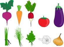 El grupo colorido grande de verduras Imagen de archivo libre de regalías