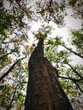 El grupo de árboles se llama bosque imagenes de archivo