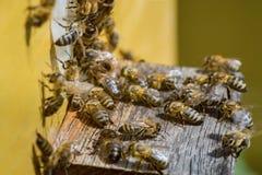 El grupo de abejas, descansando y toma el sol en el sol en día caliente, cerca de Imagen de archivo libre de regalías