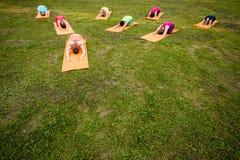 El grupo de amantes de la yoga Fotografía de archivo