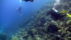 El grupo de buceadores nada sobre los arrecifes de coral metrajes