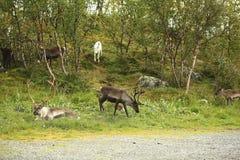 El grupo de ciervos miente al borde del bosque Fotos de archivo libres de regalías