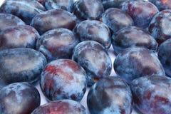 El grupo de ciruelos púrpuras se cierra para arriba Foto de archivo