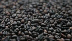 El grupo de granos de café asados en la parte inferior endereza en el backgroun blanco almacen de video