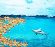 El grupo de los peces de colores hace una boca grande para comer el tiburón El concepto de unidad es fuerza, trabajo en equipo y  fotografía de archivo libre de regalías