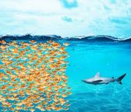 El grupo de los peces de colores hace una pared contra el tiburón El concepto de unidad es fuerza, trabajo en equipo y sociedad fotografía de archivo