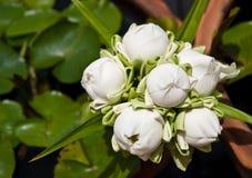 El grupo de loto blanco elaborado imagenes de archivo