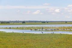 El grupo de pájaros salvajes en Lagoa hace Peixe fotos de archivo libres de regalías