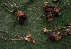 El grupo de secado subió en la planta de la hierba verde imágenes de archivo libres de regalías