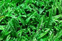 El grupo del helecho verde Foto de archivo libre de regalías
