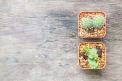El grupo del primer de cactus en pote blanco y marrón plástico en el escritorio de madera texturizó el fondo en la visión superio Fotografía de archivo libre de regalías