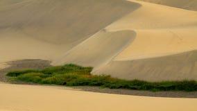 El grupo grande de hierba en las dunas de arena abandona Imagenes de archivo