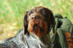 El guardar del perro Fotografía de archivo libre de regalías