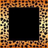 El guepardo mancha el marco Imagen de archivo libre de regalías