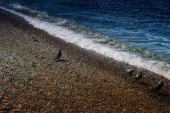 El guijarro cubrió la línea de la playa con las palomas Imagen de archivo libre de regalías