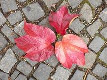 El guijarro que pavimenta el sendero con las hojas coloridas secas del otoño, granito cobbles foto de archivo