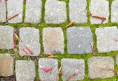 El guijarro que pavimenta el sendero con las hojas coloridas secas del otoño, granito cobbles imagenes de archivo