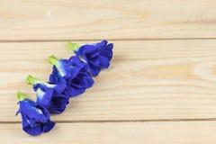 El guisante de mariposa florece en la tabla de madera, alto ángulo fotografía de archivo