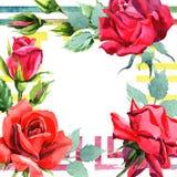 El híbrido rojo subió Flor botánica floral Cuadrado del ornamento de la frontera del capítulo stock de ilustración