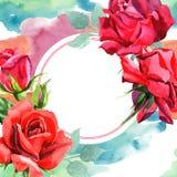 El híbrido rojo subió Flor botánica floral Cuadrado del ornamento de la frontera del capítulo libre illustration