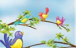 El hablar colorido de los pájaros Imagenes de archivo