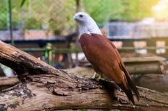 El halcón del pájaro se acurrucó en un fondo verde y anaranjado fotografía de archivo libre de regalías