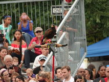 El halconero medieval 7 del festival 2016 Fotografía de archivo