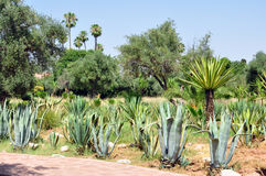 El Harti garden Stock Photography