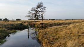 El heide holandés del strabrechtse del parque nacional Imagen de archivo