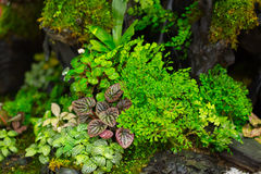 El helecho del musgo adorna en pequeño jardín de madera Imagen de archivo libre de regalías
