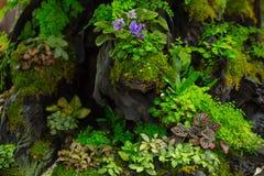 El helecho del musgo adorna en pequeño jardín de madera Foto de archivo