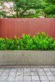 El helecho del punctatum de Microsorum, batten la cerca y el pavimento de madera Imágenes de archivo libres de regalías