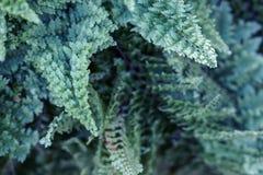 El helecho sale de follaje verde azul Fondo floral natural fotografía de archivo libre de regalías
