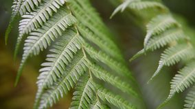 El helecho verde se va con gotas de lluvia en bosque tropical almacen de video