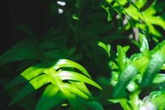 El helecho verde tropical se va con la luz del sol oscuro fotos de archivo