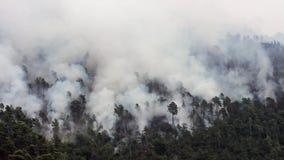 El helicóptero cae el agua en Forest Fire almacen de video