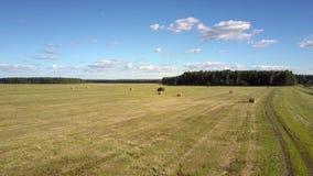 El heno aéreo del paisaje cosechó el campo contra bosque metrajes