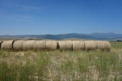 El heno recolectó en los rollos aseados en una granja en Idaho Foto de archivo