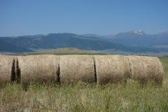 El heno recolectó en los rollos aseados en una granja en Idaho Imagen de archivo
