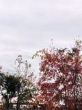 El hermoso al aire libre Fotos de archivo