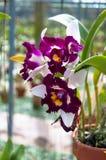 El hermoso de la orquídea blanca Fotos de archivo libres de regalías