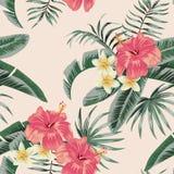 El hibisco del Plumeria sale del modelo inconsútil tropical Fotos de archivo libres de regalías