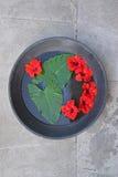 El hibisco rojo con el ñame grande deja la flotación en el agua en una cacerola enorme del metal Imagen de archivo libre de regalías