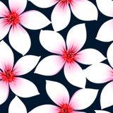 El hibisco tropical blanco florece en un modelo inconsútil Fotografía de archivo libre de regalías