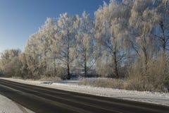 El hielo cubrió árboles imagen de archivo libre de regalías