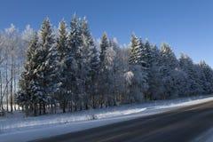 El hielo cubrió árboles imagen de archivo