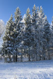 El hielo cubrió árboles imagenes de archivo